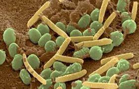باکتری های فعال در کمپوست سازی